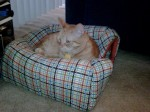 Cat ON a Plaid Igloo