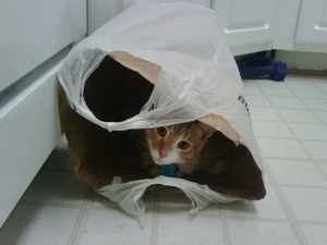 cats-in-the-bag