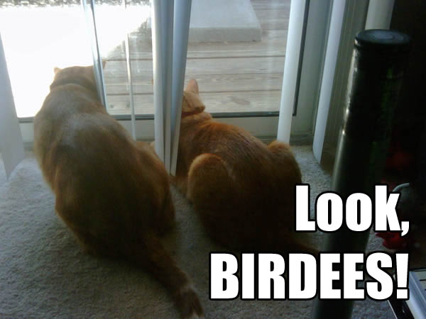 Look, BIRDEES!