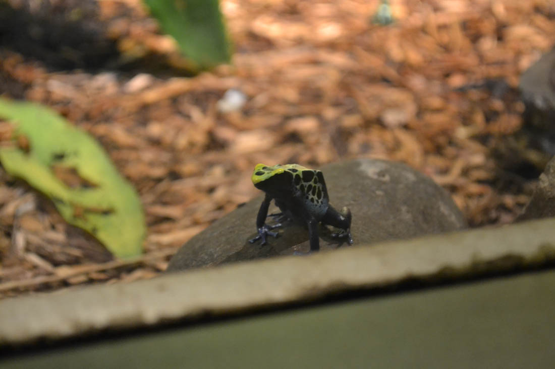 Image Result For Frog Headed Trutle